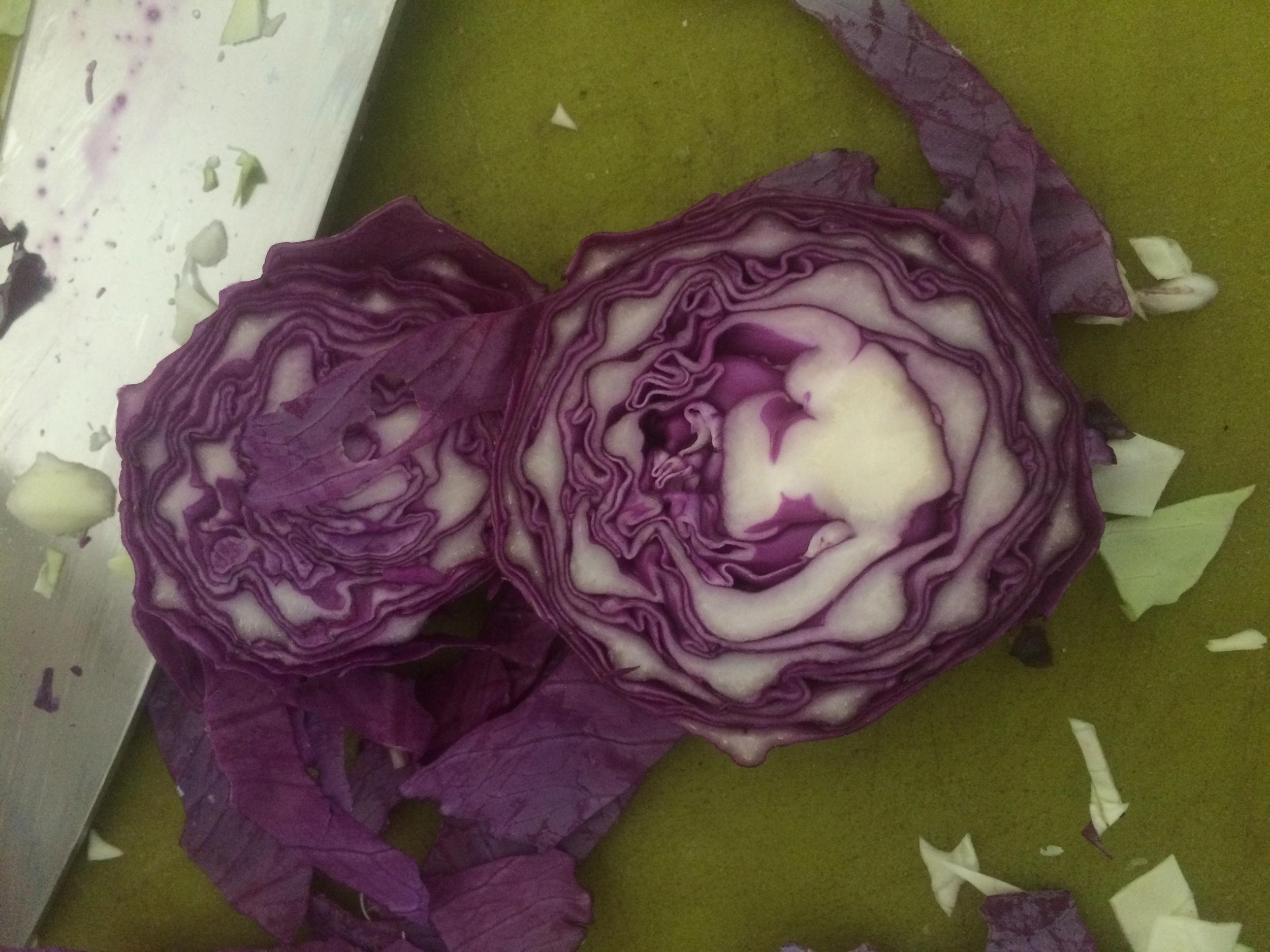 I love the designs purple cabbage makes!