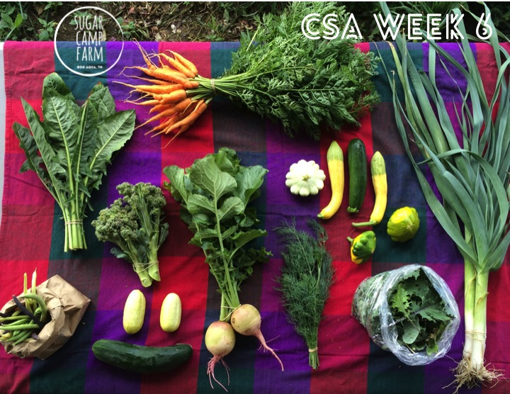 Multicolored beans, Dandelion greens or bunched kale, broccoli, cucumbers, carrots, watermelon radishes, dill or cilantro, summer squash, baby kale or mustards, and leeks!