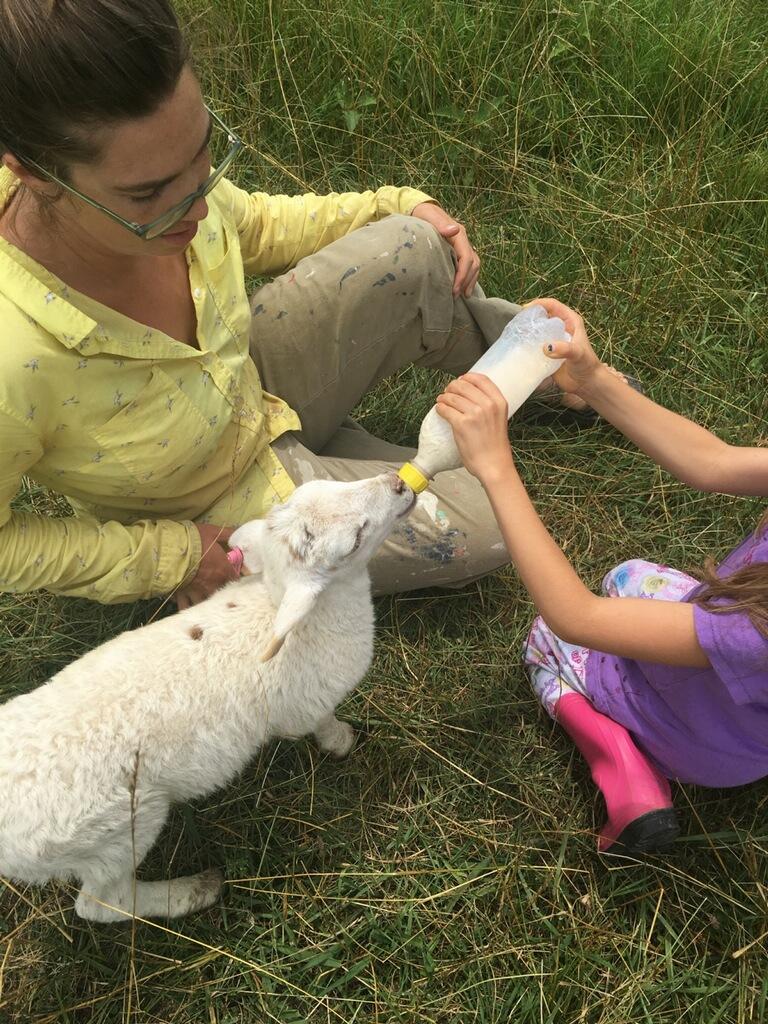 Nico feeding baby lamb.