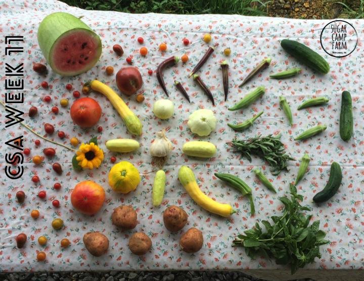 CSA week 11!! Tomatoes, cherry tomatoes, garlic, watermelon, potatoes, squash, basil, Thai basil, okra or eggplant, a hot pepper, perhaps a flower or two!