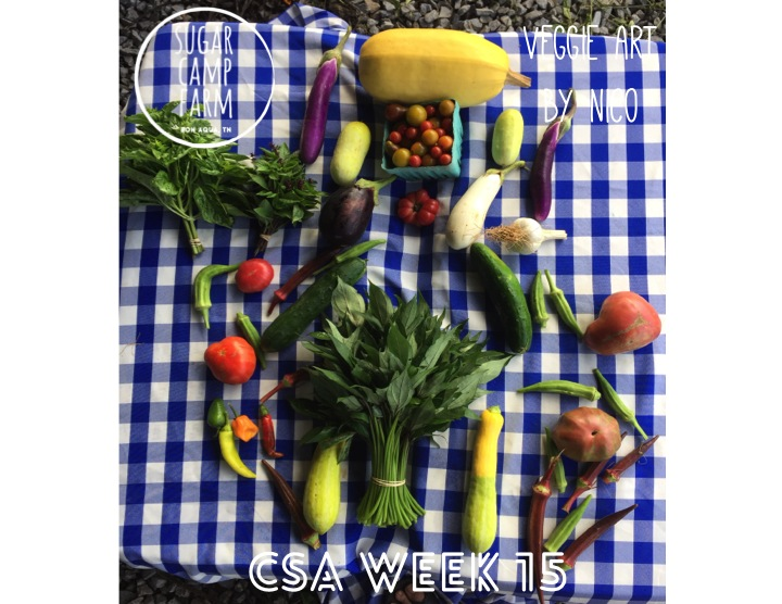 Nico my 7 year old friend designed this week's csa art as I am out of town! Week 15 CSA! Basil. Thai basil, sweet potato greens, a squash of your choice, tomatoes, a pint of cherry tomatoes, okra, eggplant, garlic, summer squash and cucumbers mixed, and a few hot peppers.