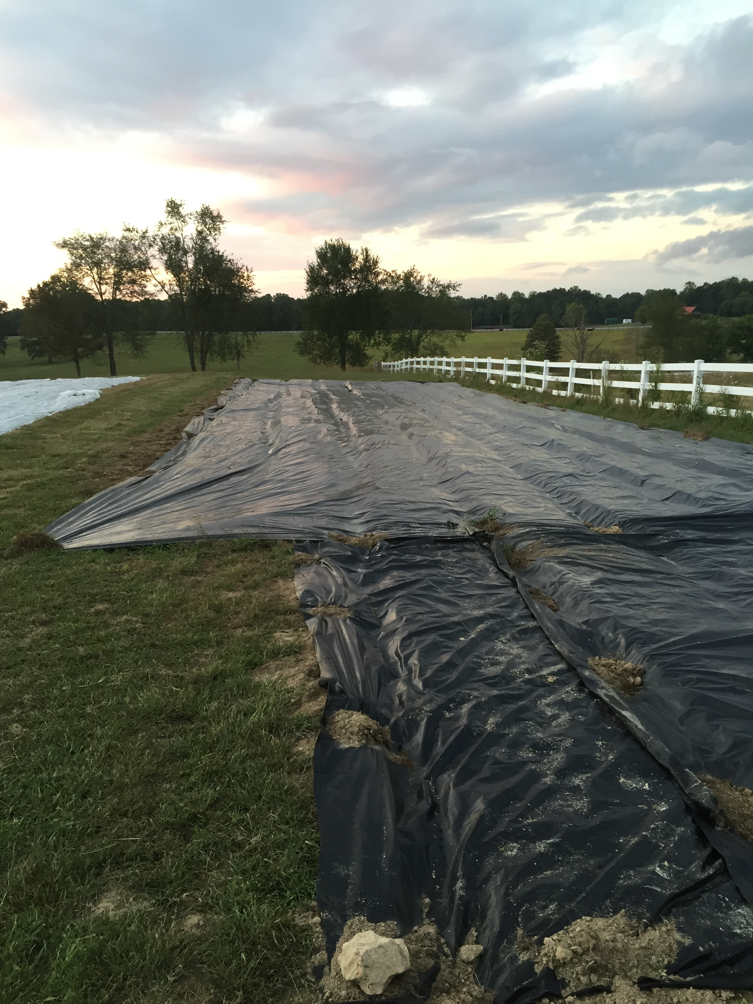 Using tarps to demolish weed seed for spring.