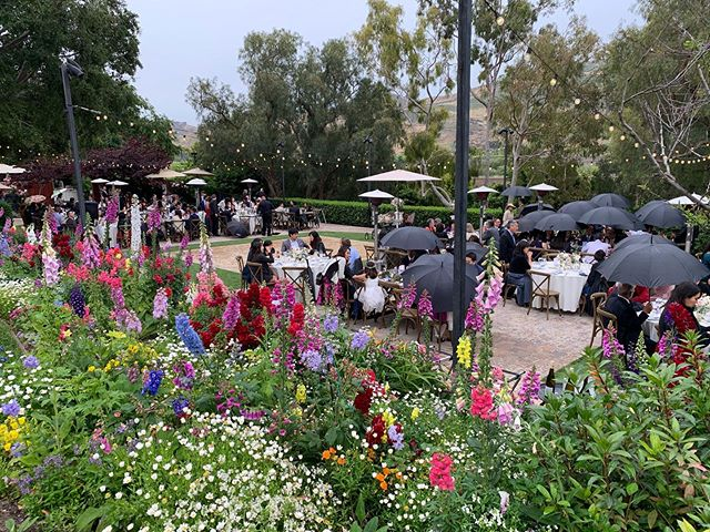 We had a little drizzle last night, though nothing but sunny attitudes. Guests stayed and danced to the end. Strange weather for spring. Thankfully we have about 100 umbrellas.