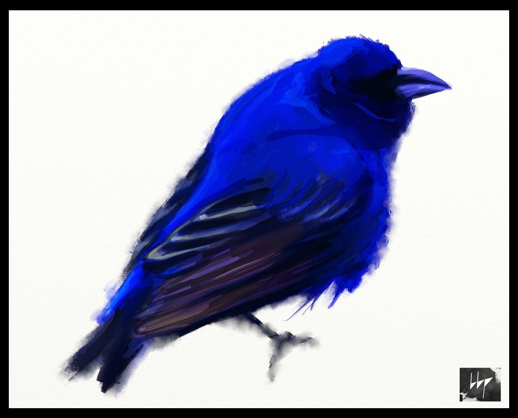 moineau bleu copie.jpg