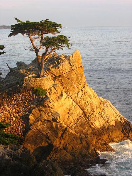 450px-Lone_Cypress_Sunset.JPG