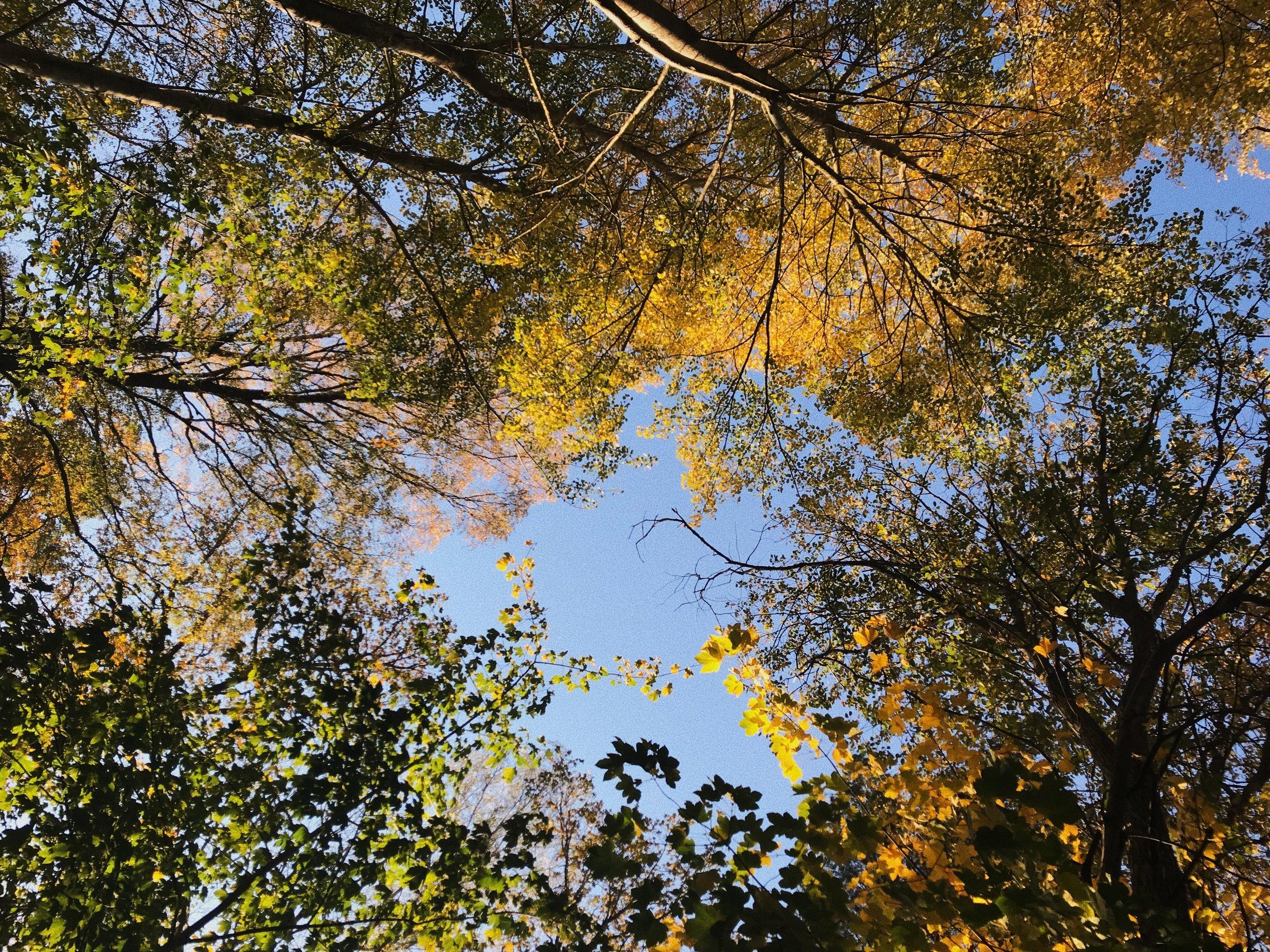 autumn-sweden-2018