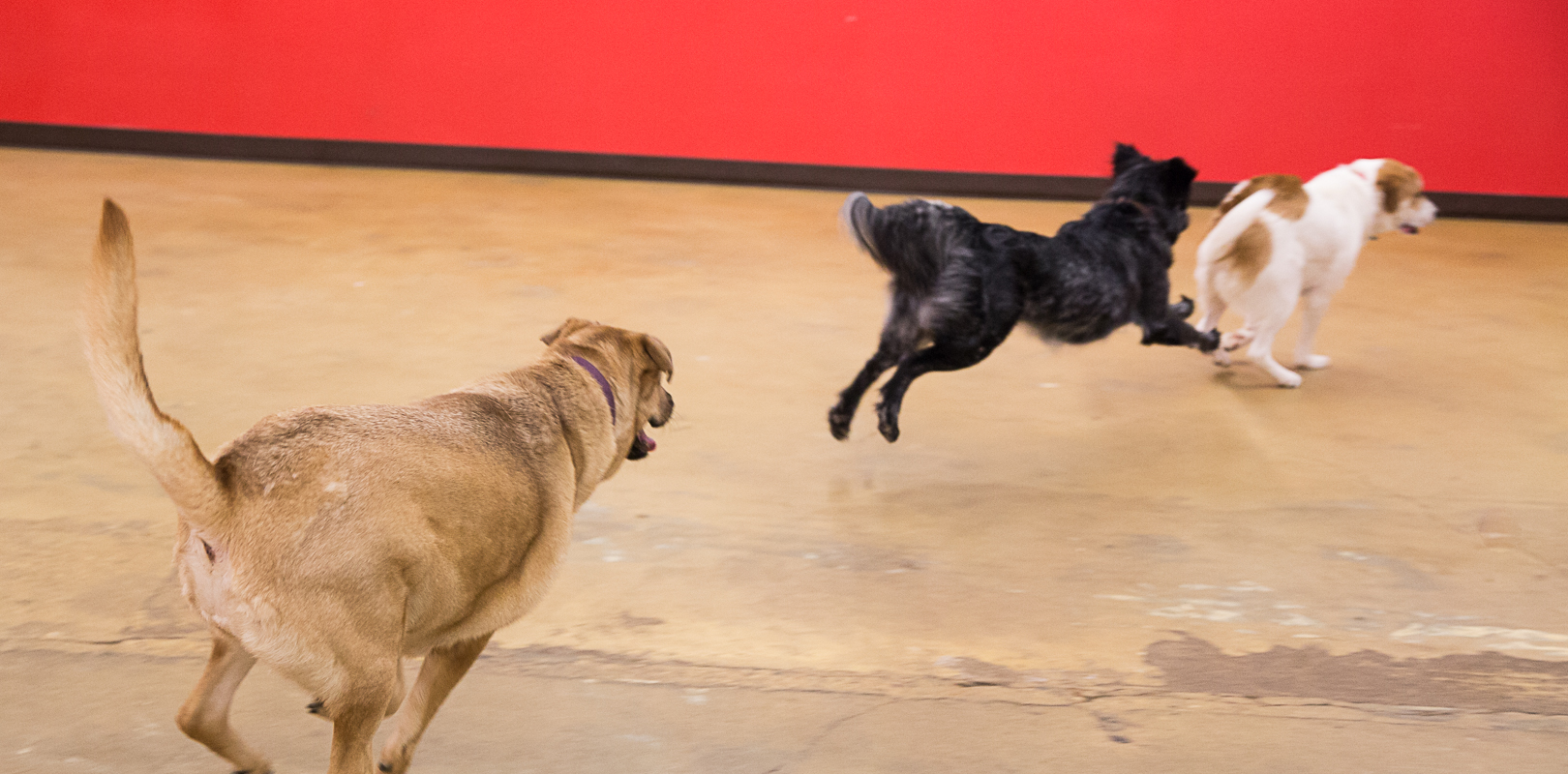 Keep Austin Waggin'!   We're a luxury boarding and doggie daycare located in the coolest city on the map.