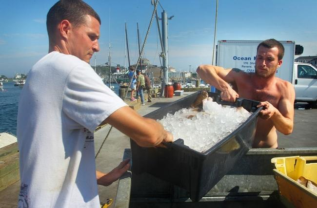 Rob Roche, left, and Dan Woods, both of Hull, unload the day's catch at Scituate Town Pier on Tuesday, July 21, 2015. |   Gary Higgins/The Patriot Ledger
