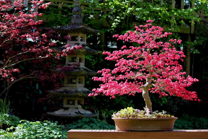 Bonsai tree -486975919.jpg