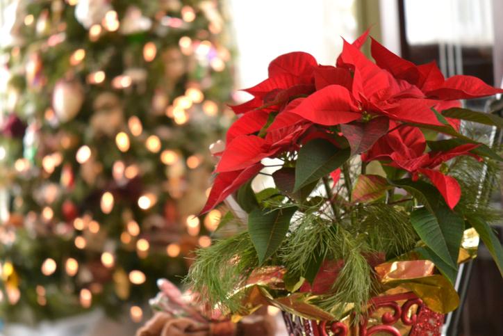 Christmas 618950928.jpg