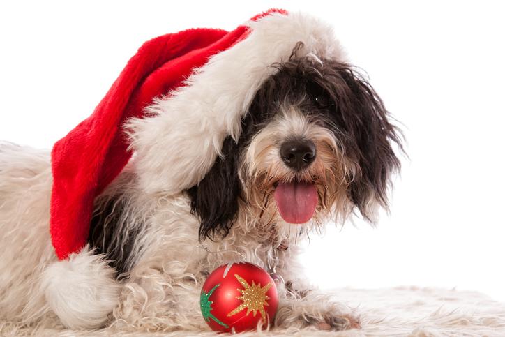 Christmas Dog 625168012.jpg