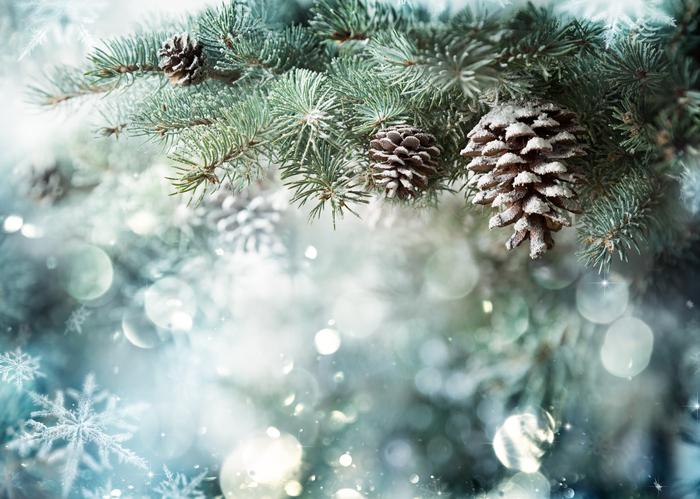 Christmas Winter -489761944.jpg