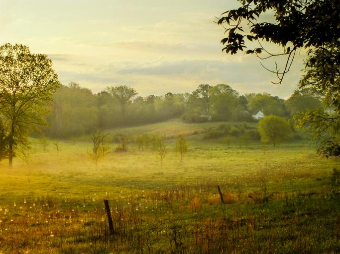 Farm Field 520241323.jpg