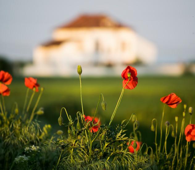 Flowers Home Blurred -476094306.jpg
