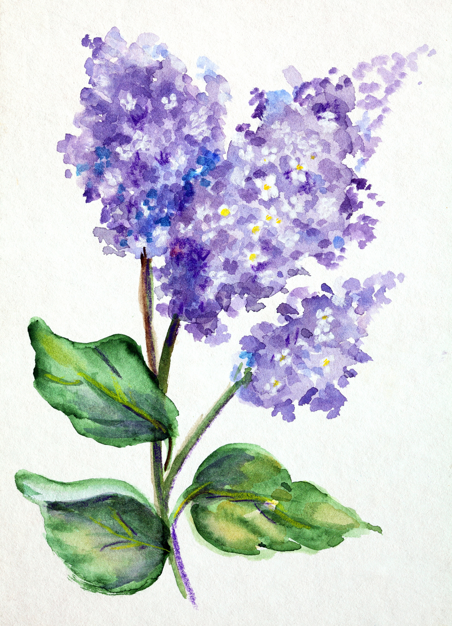 Flowers lilac -180735413.jpg