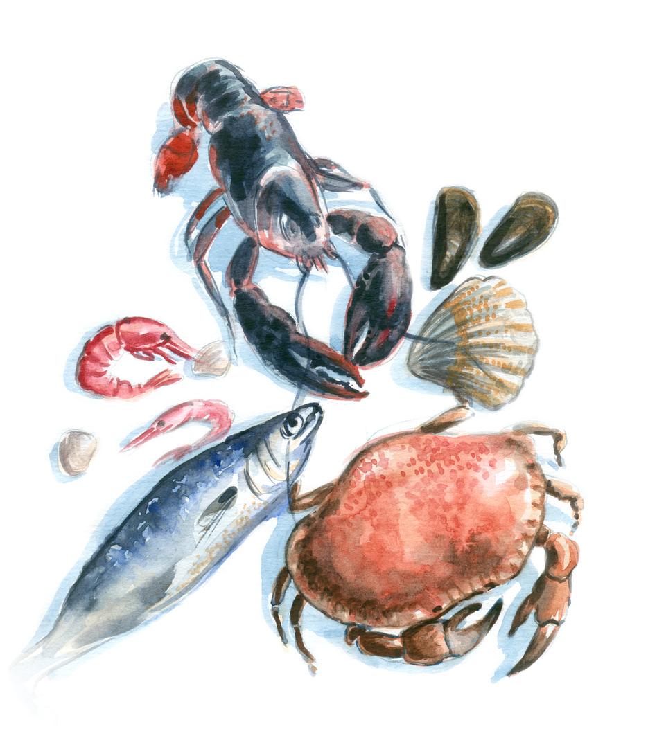 Food Seafood Watercolor -508940440.jpg