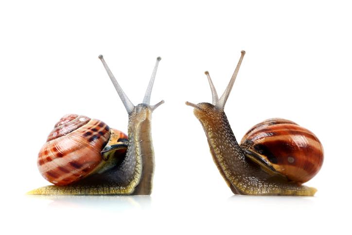 Snail -183885522.jpg