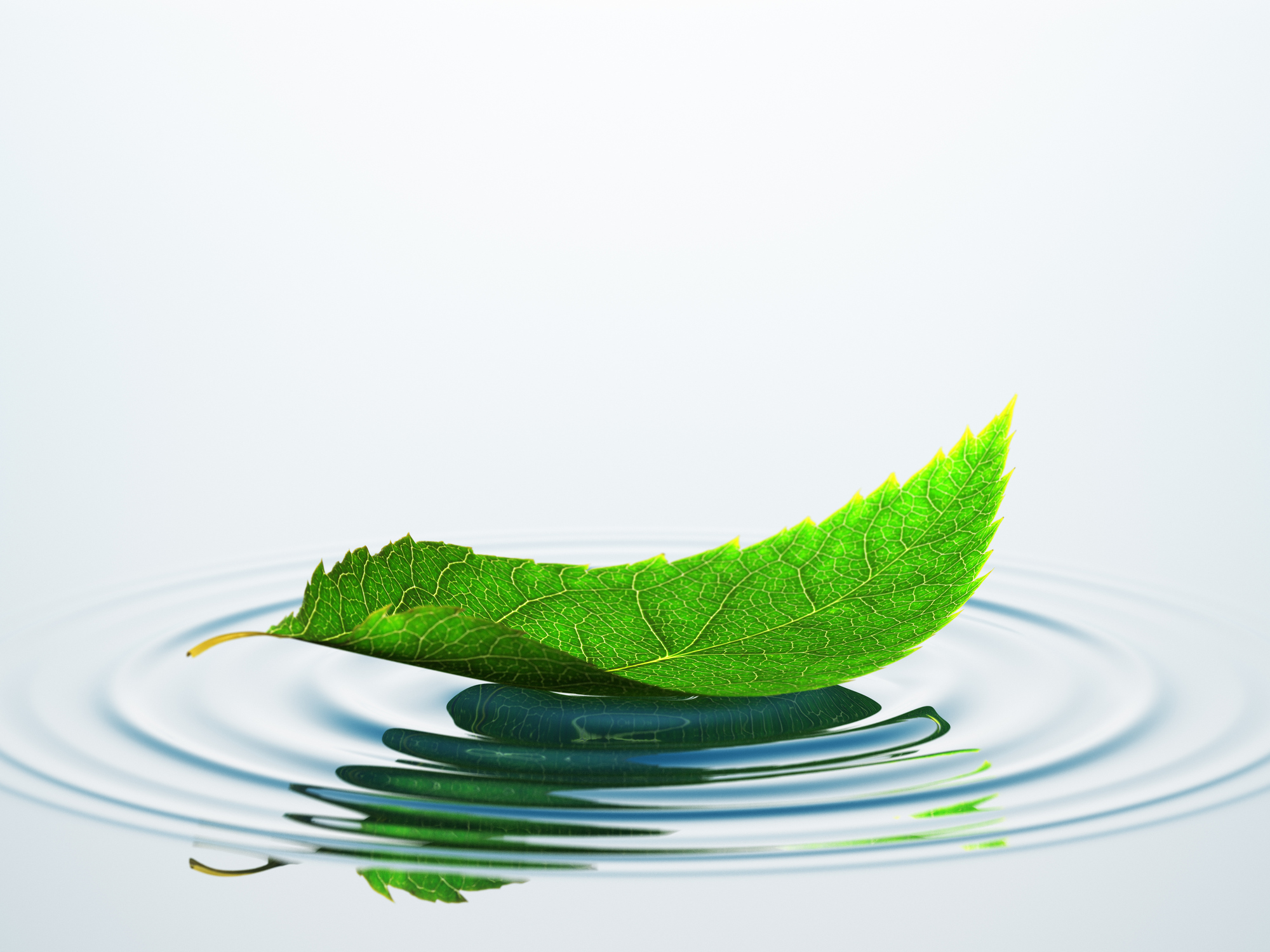 Water leaf puddle -496438640.jpg