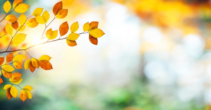 Fall leaves 482107380.jpg