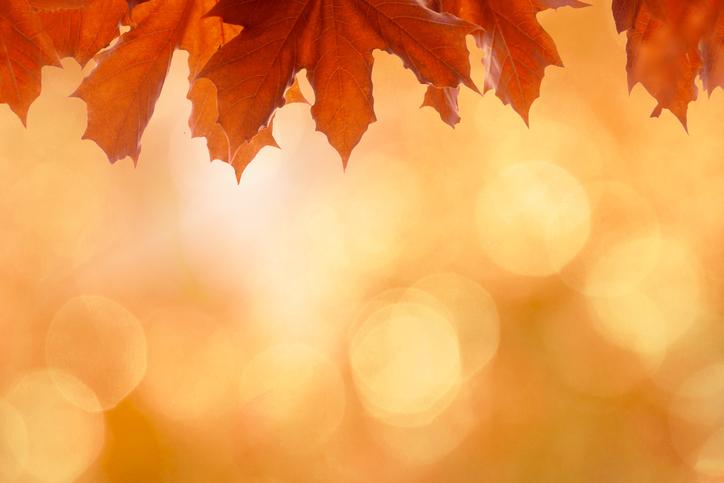 Thanksgiving 487380954.jpg