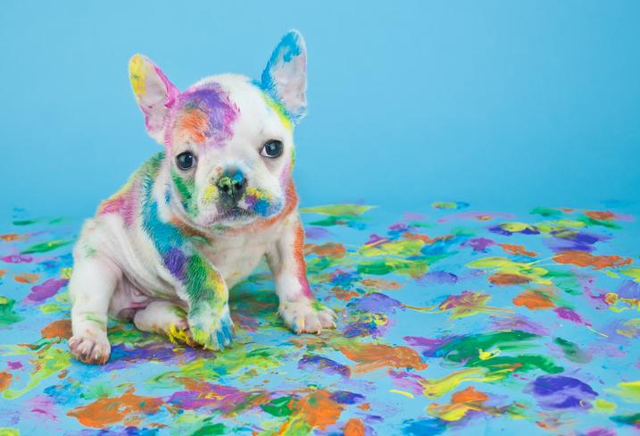 Dog painted 504528846.jpg