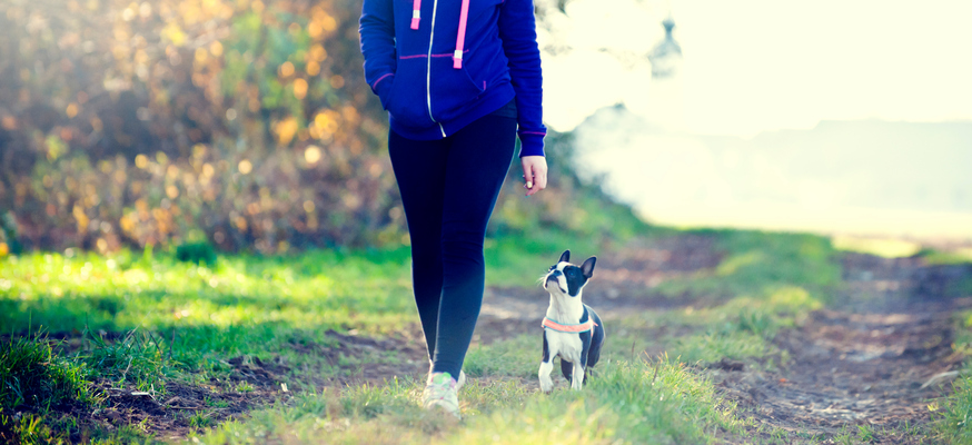 Dog walking with woman 496492162.jpg