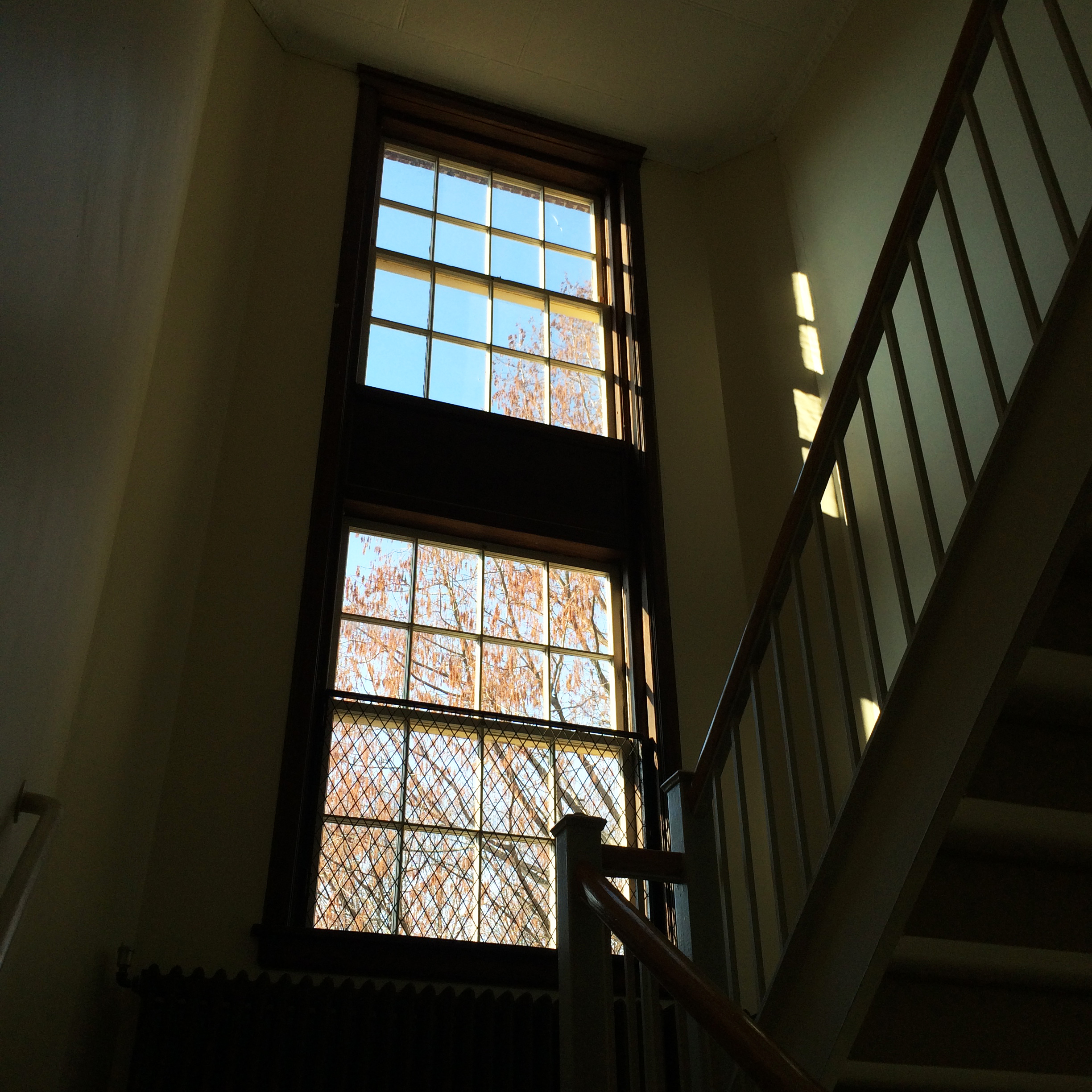 Double height windows in the stairwells looking out at a 100 year old tree at  Kendall Dean school in North Smithfield