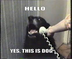 yesthisisdog.jpg