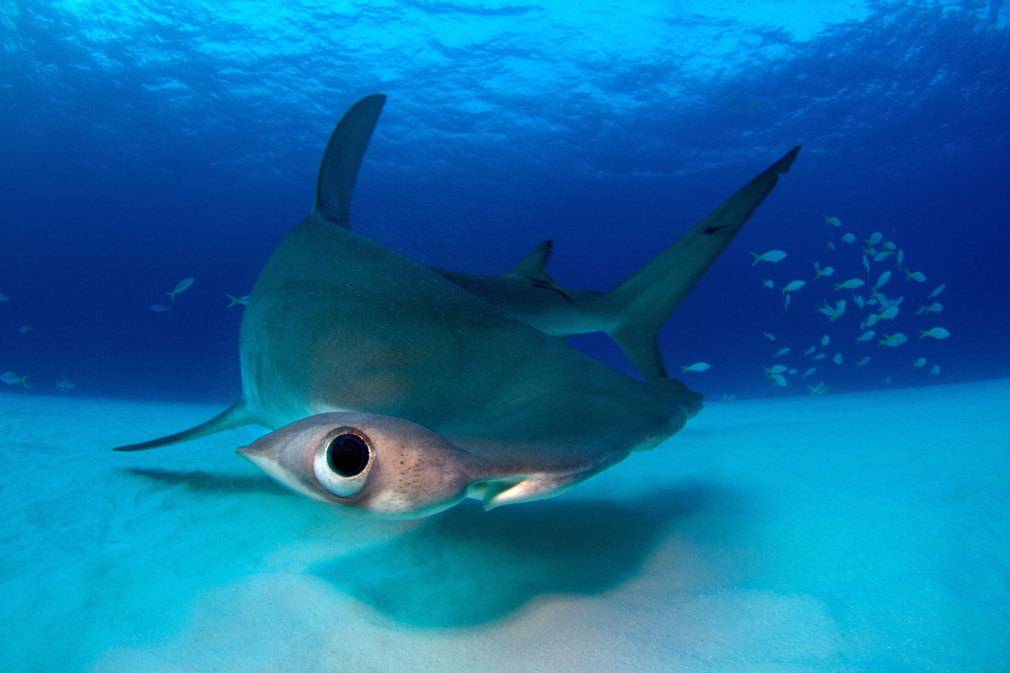 ocean conservation photography