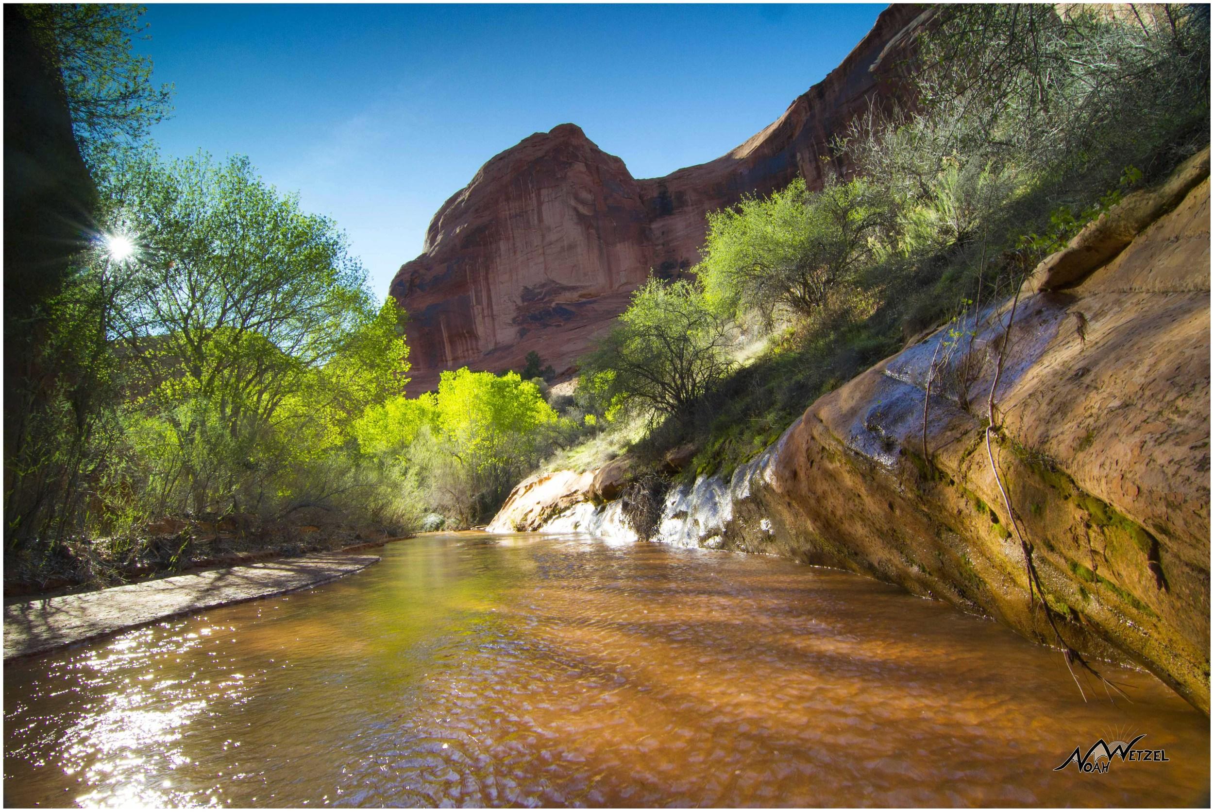 Backlit Coyote Creek. Coyote Gulch. Escalante, Utah