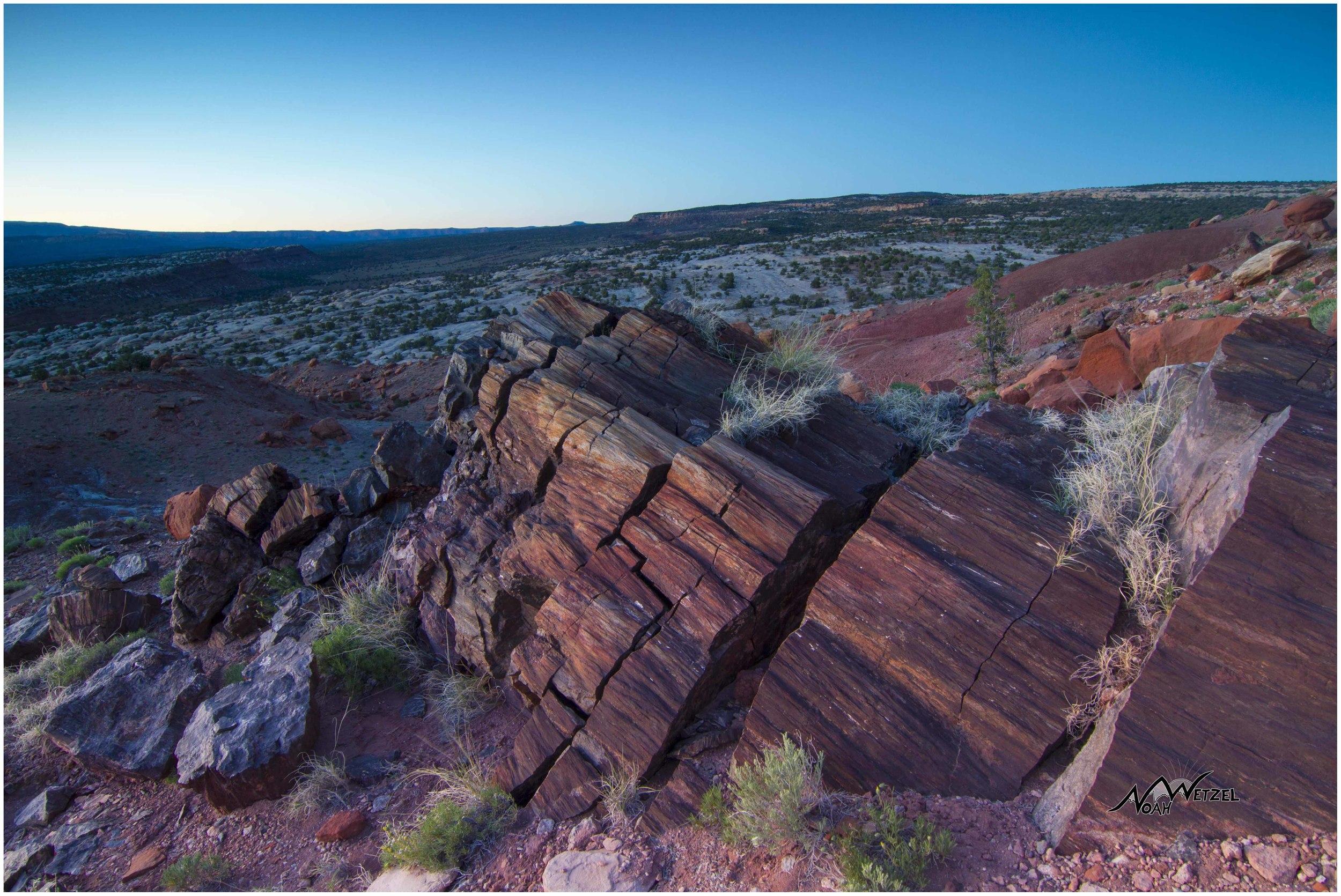Section of Petrified Wood. Escalante, Utah