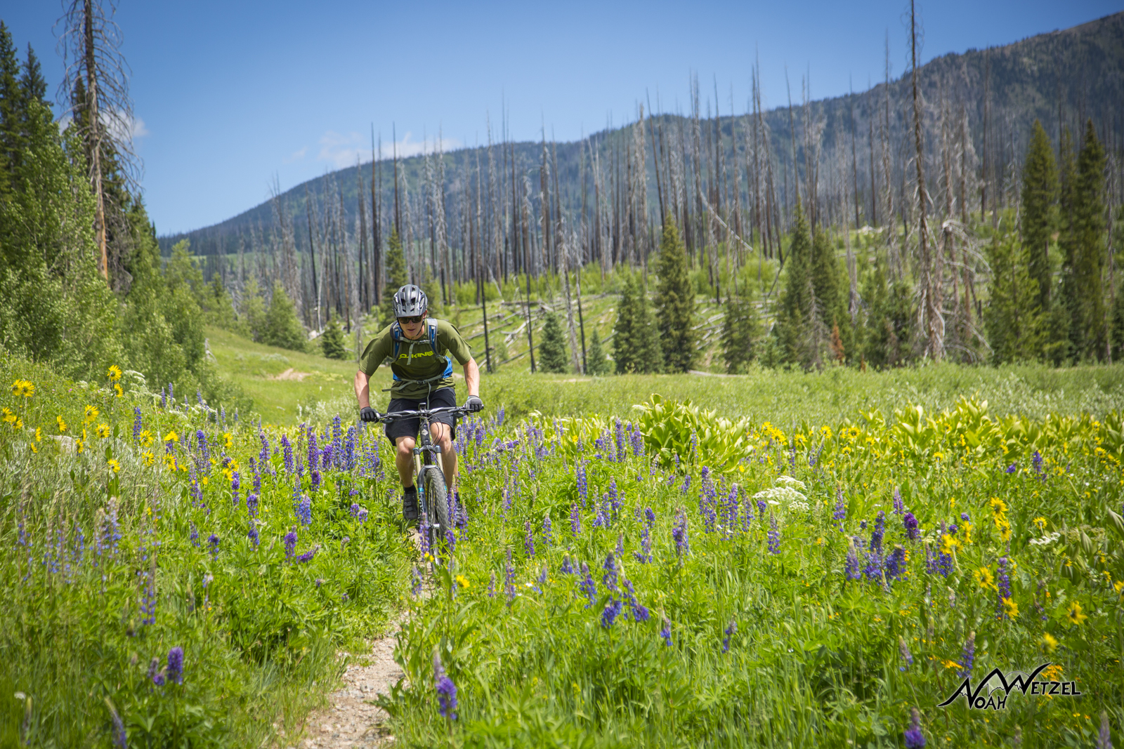 Beau Schecter riding through a burn zone and wildflowers on the Diamond Park Trail (1189) in North Routt County.