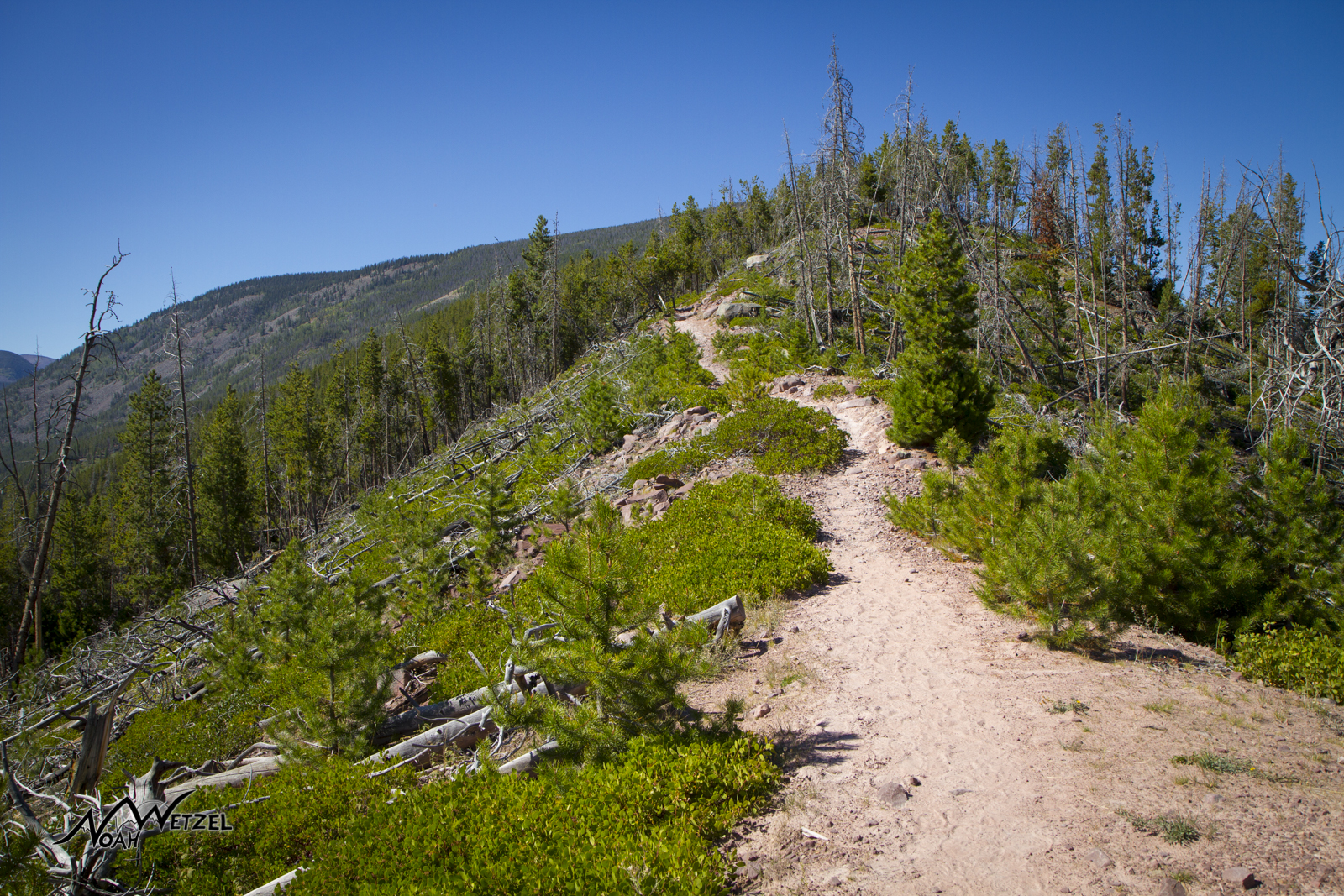 The first few miles on trail 056 in the High Uintas Wilderness. Utah.