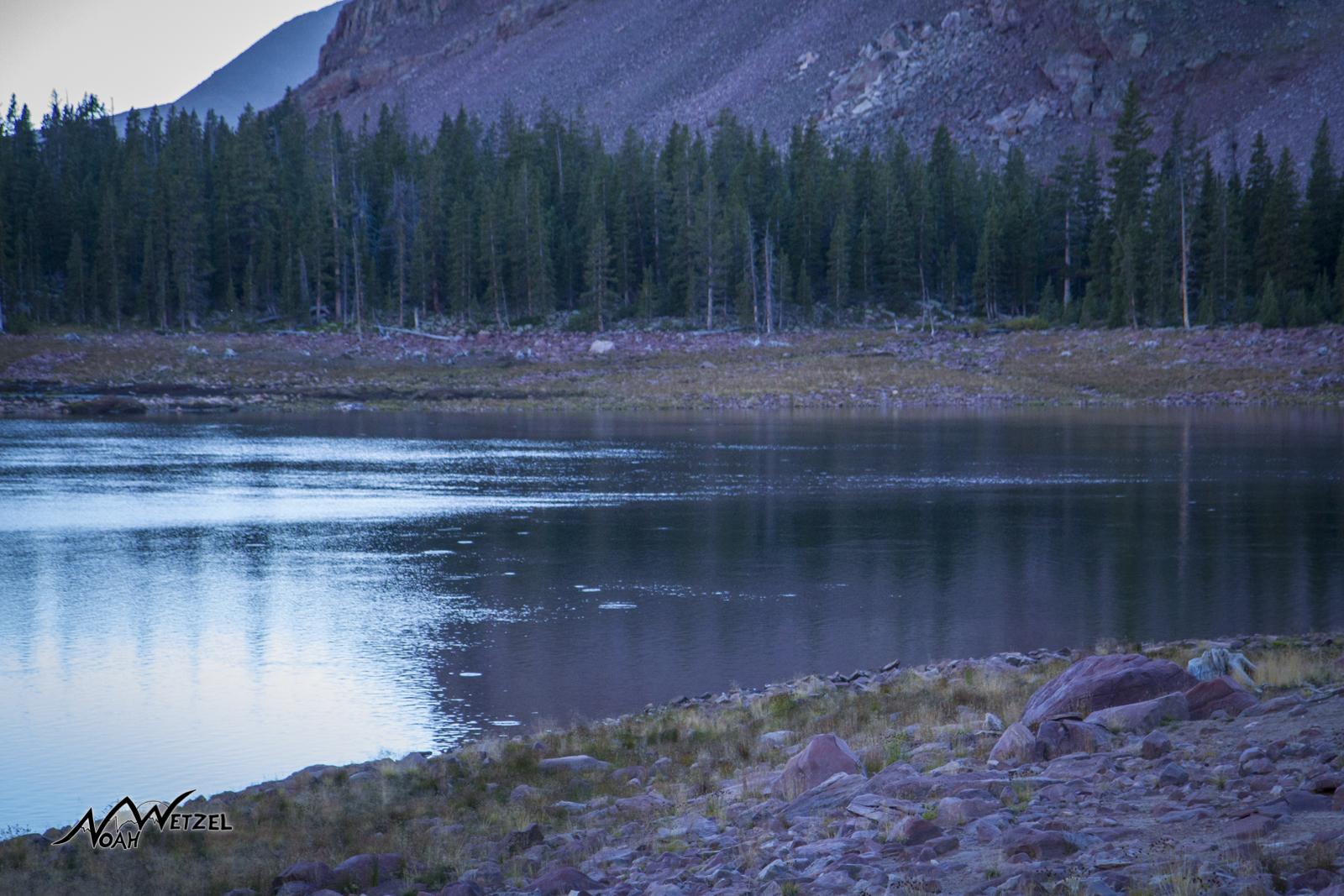 Fish a rising at sunset on East Timothy Lake. High Uintas Wilderness. Utah