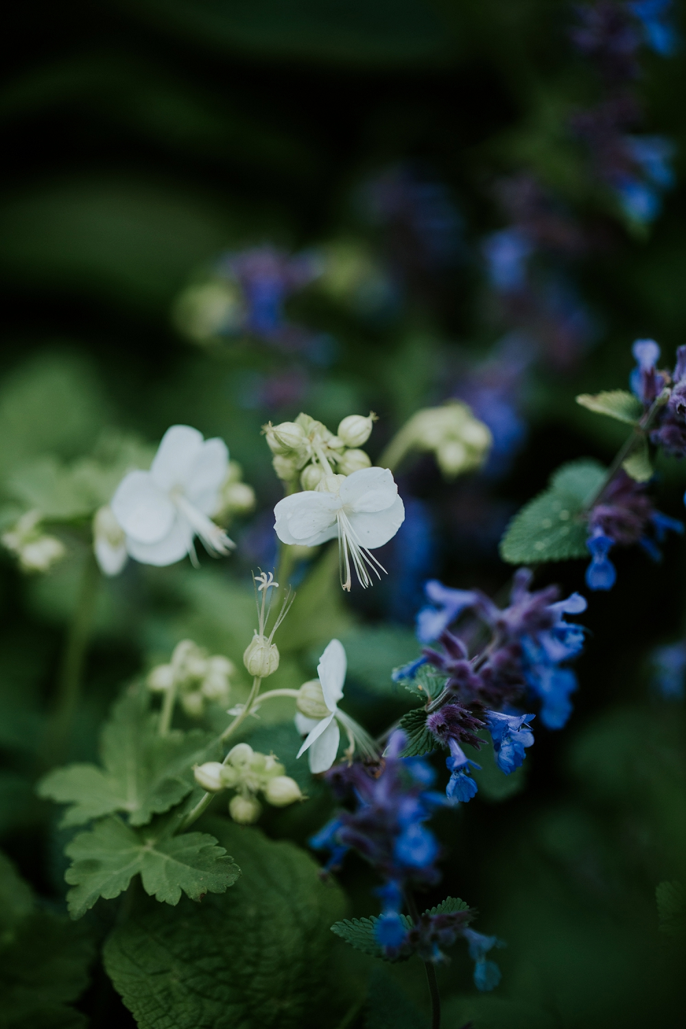 blue-white-planting-combinations