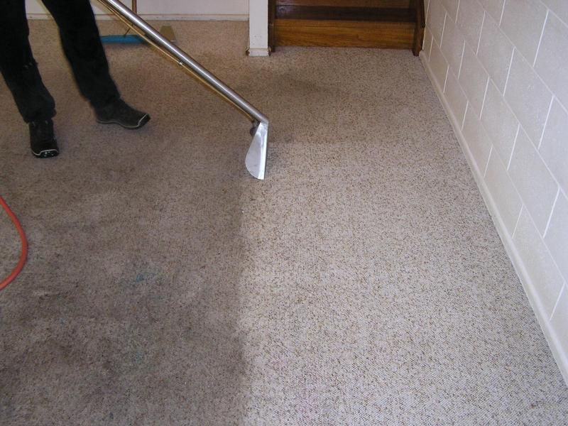 carpet cleaners.jpg