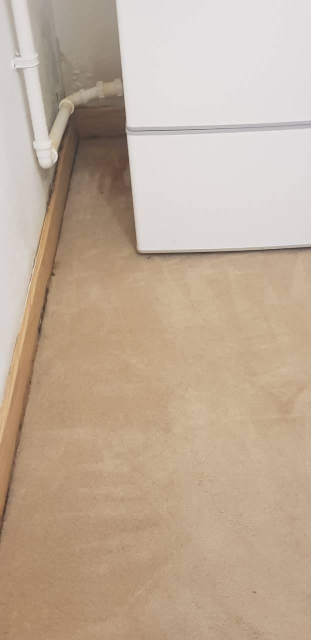 carpet in Kensigton is clean.jpg