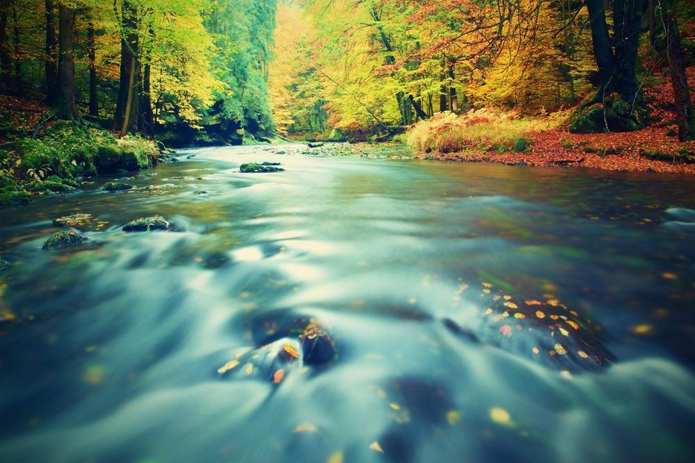 Image ID: 347658884. Copyright: rdonar. Shutterstock.com