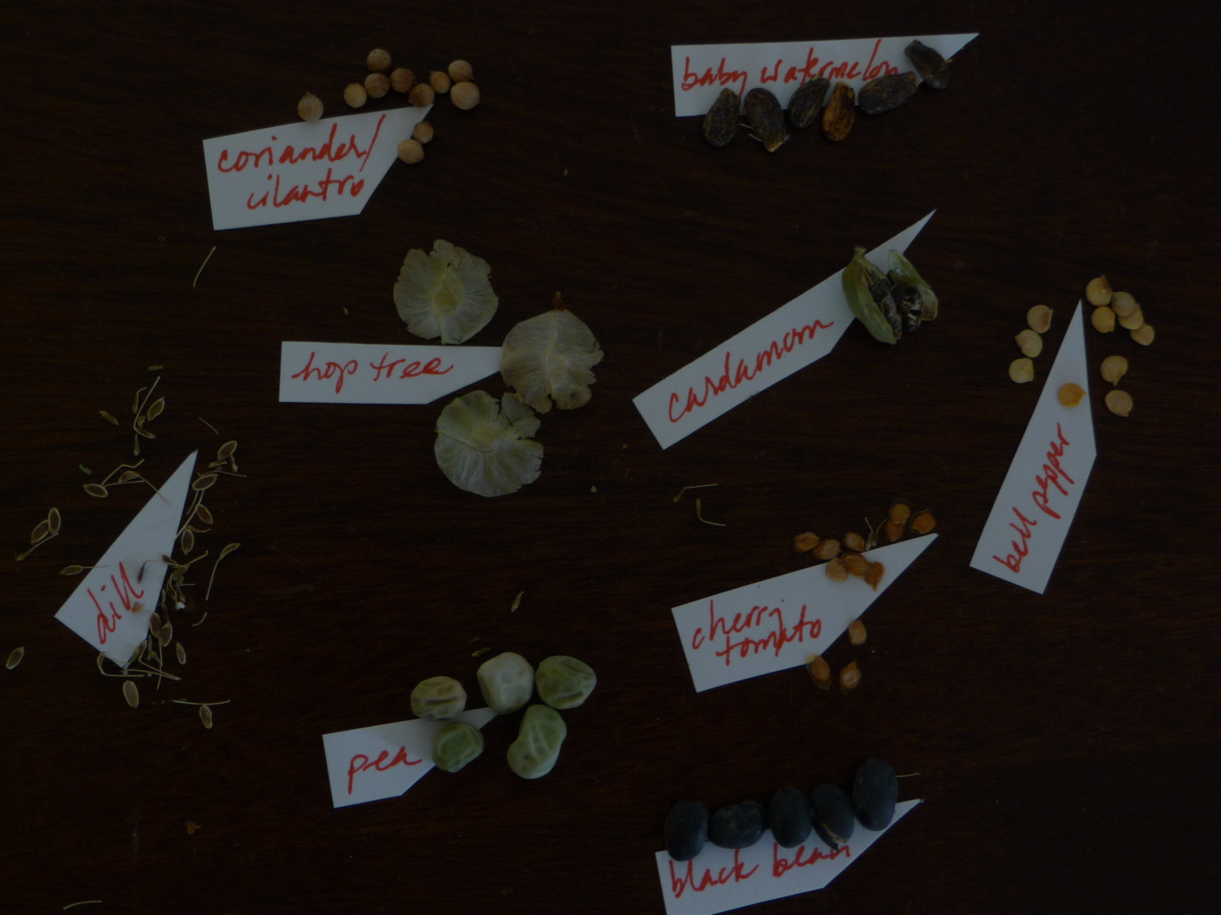 A variety of seeds ready for spring planting. Photo credit: Alissa Simon
