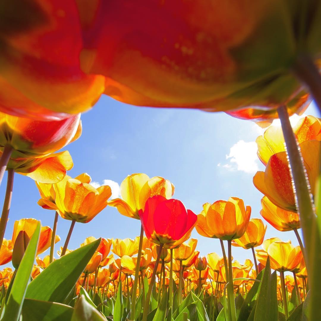 Bee_Kind_Garden_Blossoms.jpg