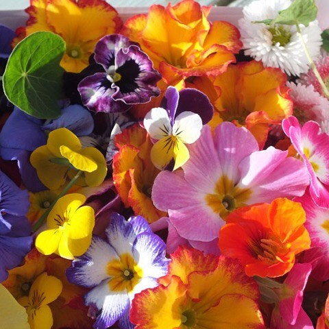Bee_Kind_Garden_Edible_Flowers.jpg