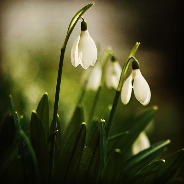 Bee_Kind_Garden_Spring.jpg