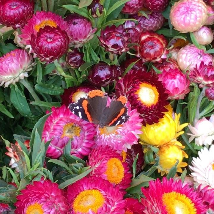 Blume_Pollinator.jpg