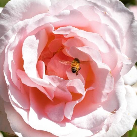 Blume_Wild_Flower_Week.jpg