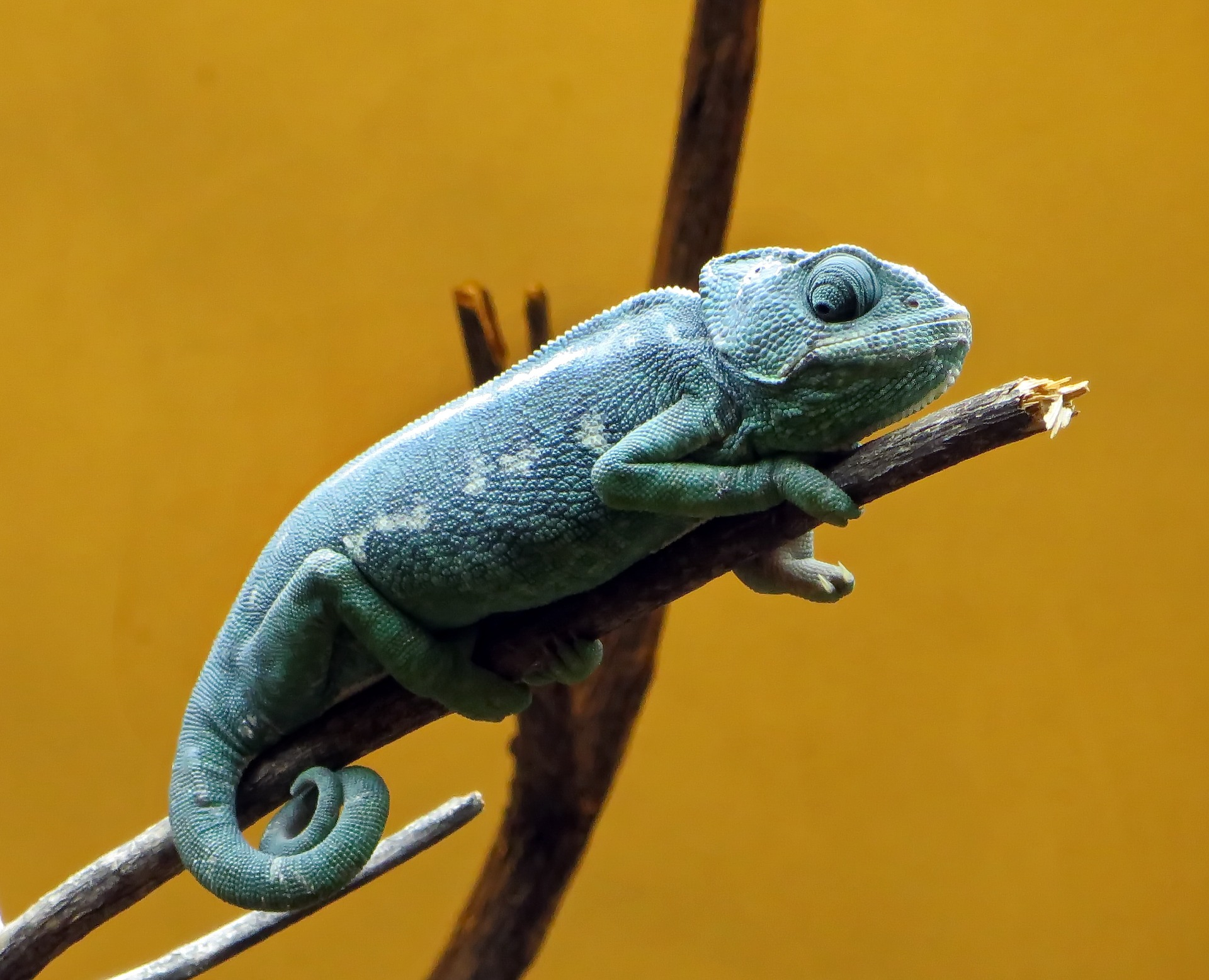 Awesome little chameleon dude knows the deal.