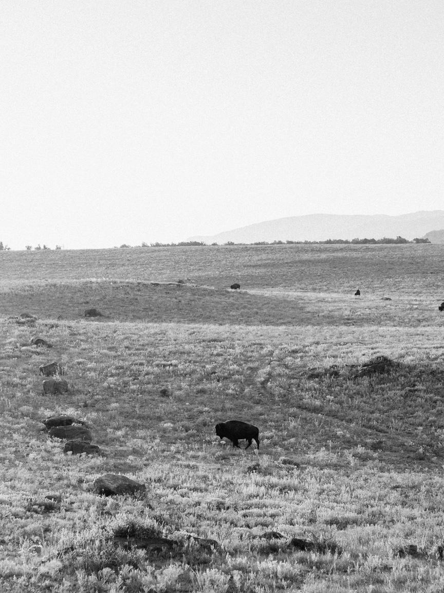 arkansas oklahoma bison camp camping ozarks truck dog america yall pawlowski vsco olympus omd em5 landscape