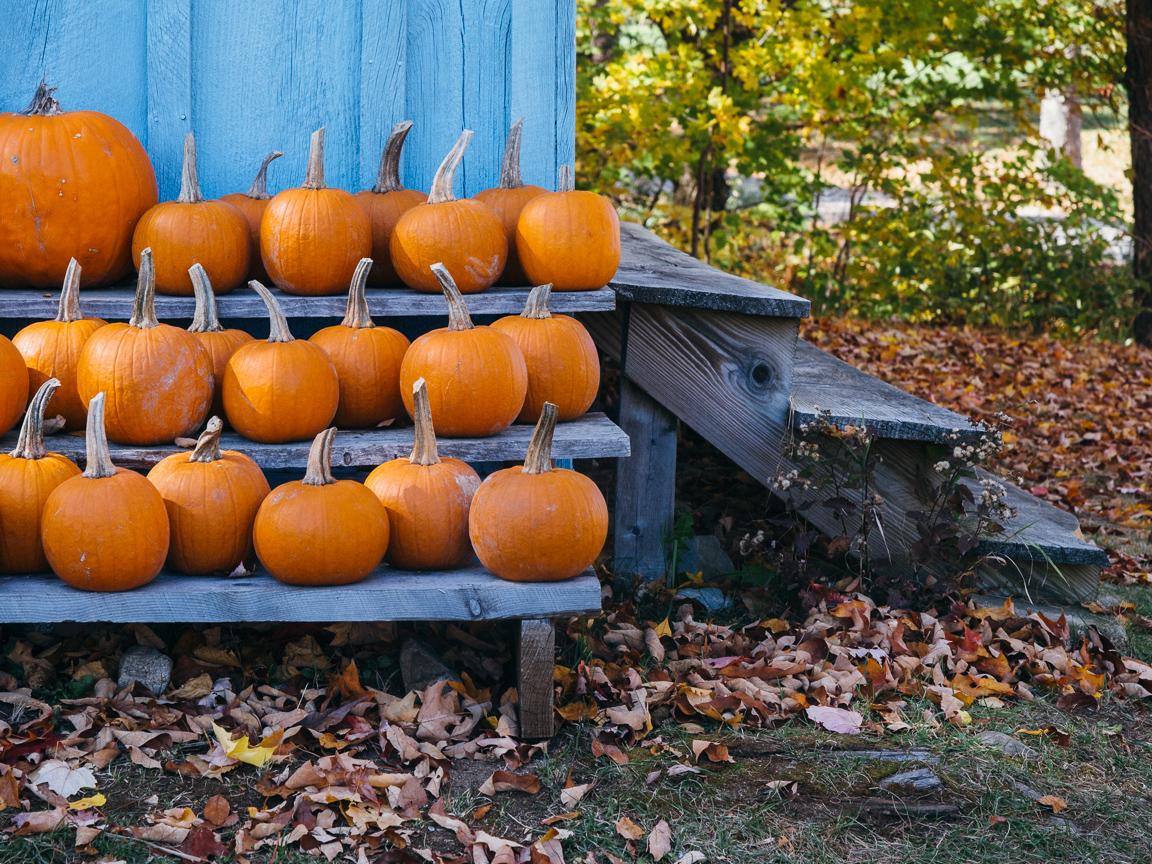 new hampshire camping hiking foliage mountains vsco olympus jeremy pawlowski america yall americayall pumpkin