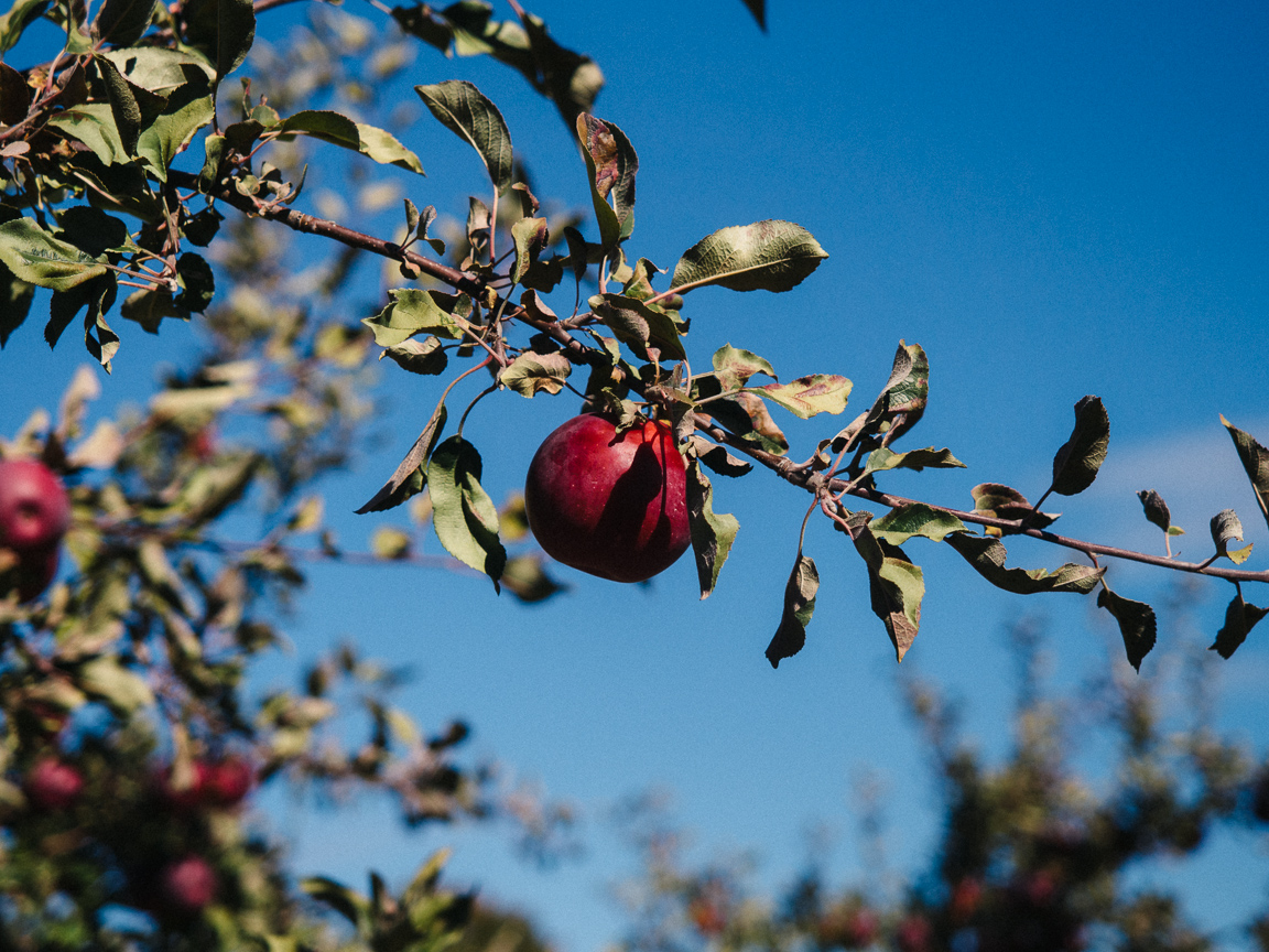 new hampshire camping hiking foliage mountains vsco olympus jeremy pawlowski america yall americayall apple