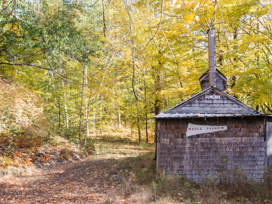 2 new hampshire camping hiking foliage mountains vsco olympus jeremy pawlowski america yall americayall maple