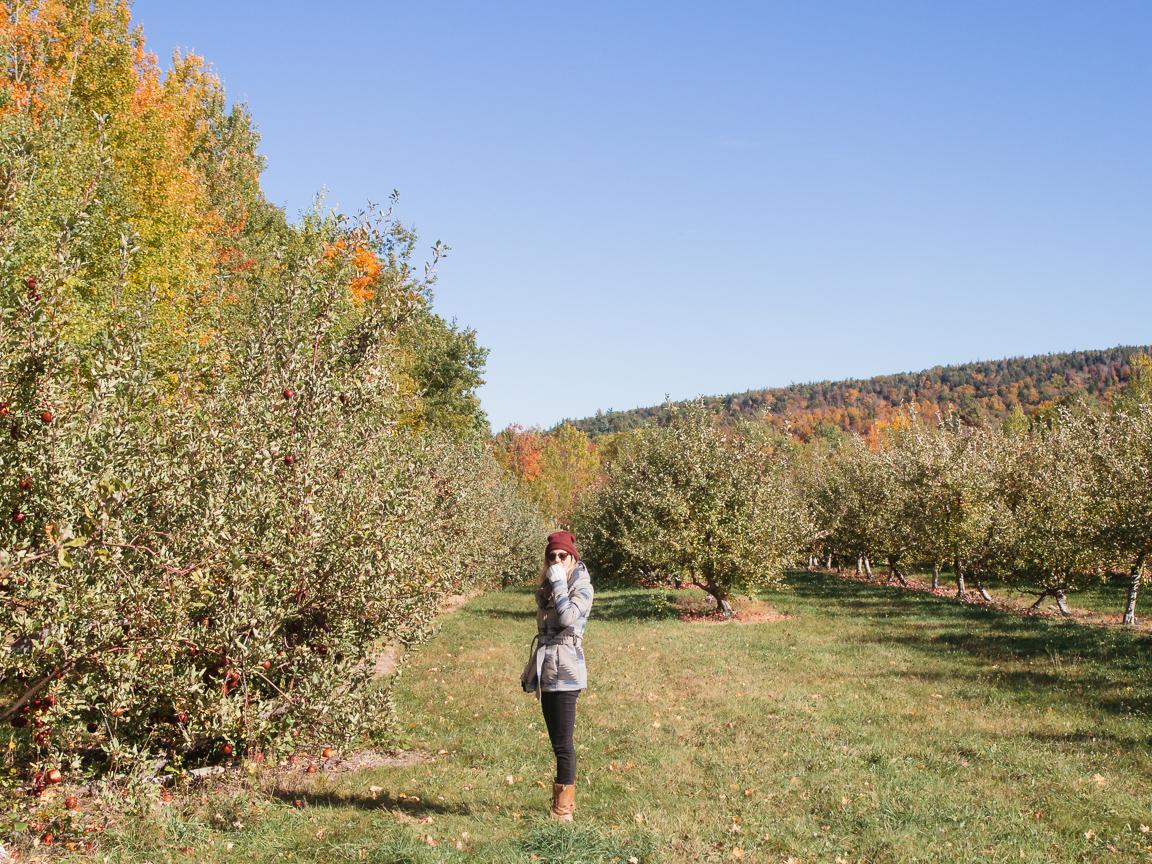 2 new hampshire camping hiking foliage mountains vsco olympus jeremy pawlowski america yall americayall apple picking